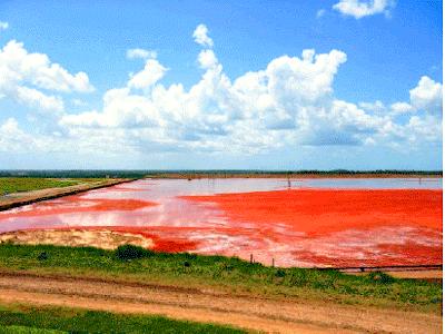 Alumar emite nota e garante que as lagoas de lama vermelha não oferecem riscos em São Luís
