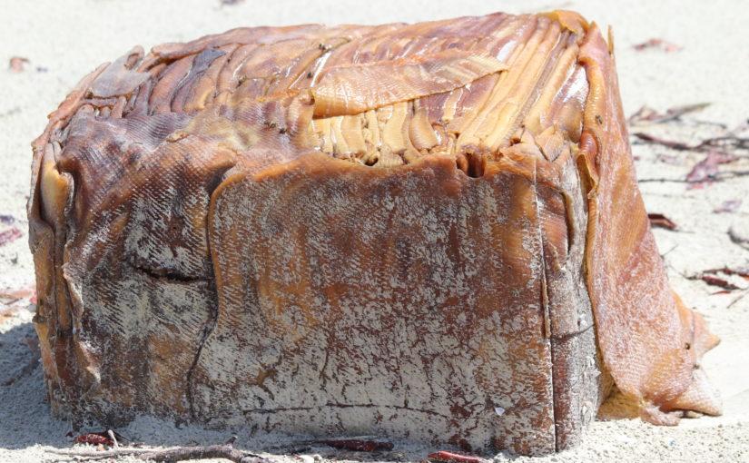 Caixas misteriosas apareceram na mesma praia onde encalhou o navio Baraka, no litoral do Maranhão