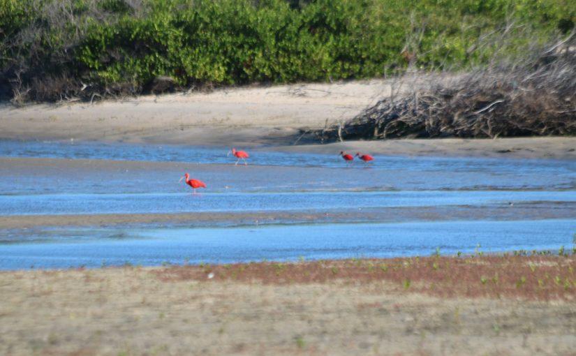 Ilha de Mangunça e praia da Taboa: duas aventuras de barco pela Reserva Extrativista de Cururupu