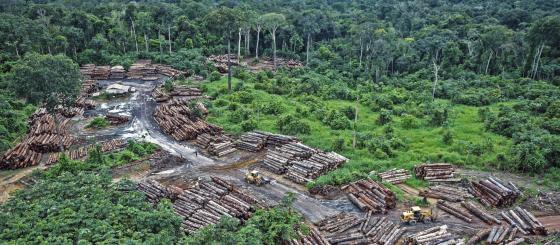 Oportunidade: bolsas para jornalismo investigativo sobre crimes ambientais
